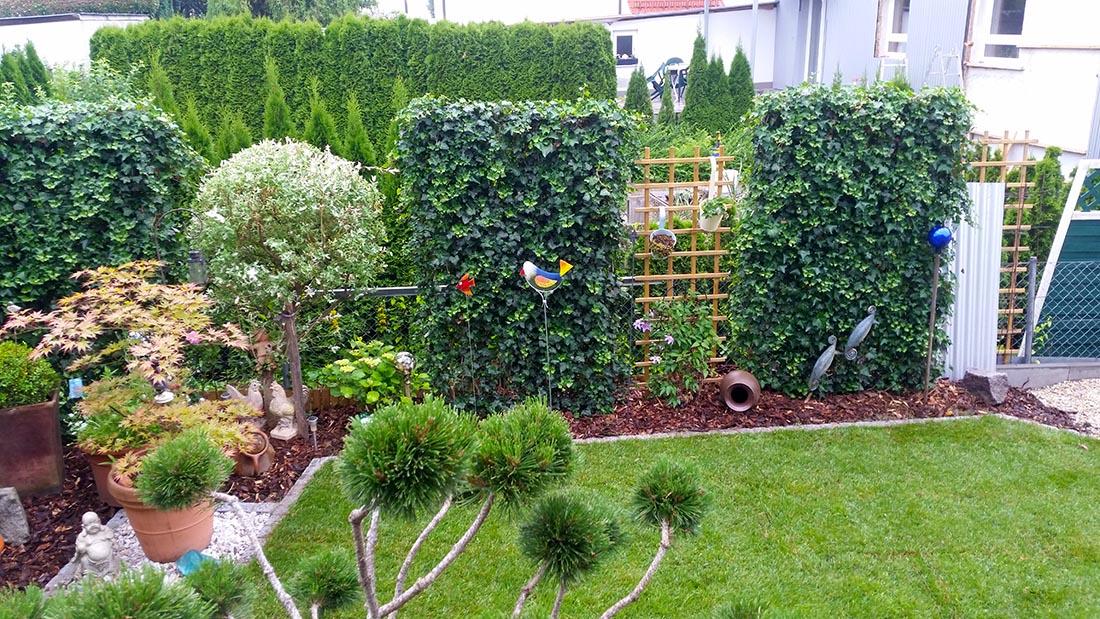 Bepflanzung - Gabionenwand bepflanzen ...
